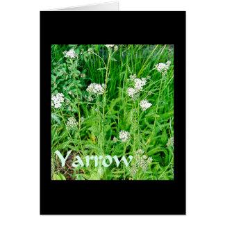 Cartão Plantas mágicas - Yarrow