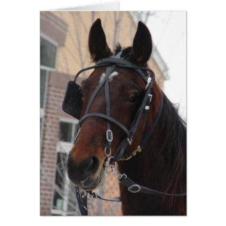 Cartão Poço olá! lá, um cavalo de Amish