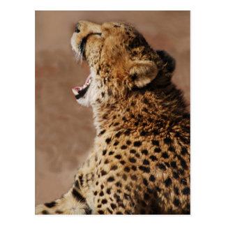Cartão Postal A chita poderia susto um leão