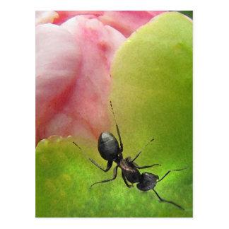 Cartão Postal A formiga e a peônia