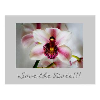 Cartão Postal A orquídea cor-de-rosa, salvar a data!!!