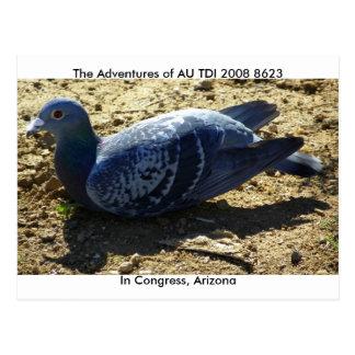 Cartão Postal A união americana do pombo de competência