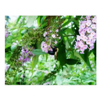 Cartão Postal Abelha de carpinteiro oriental na flor de Salvia