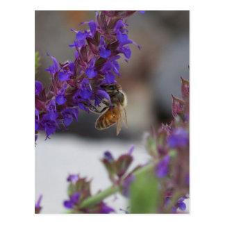 Cartão Postal Abelha em Salvia
