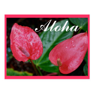 Cartão Postal Aloha antúrio de Havaí