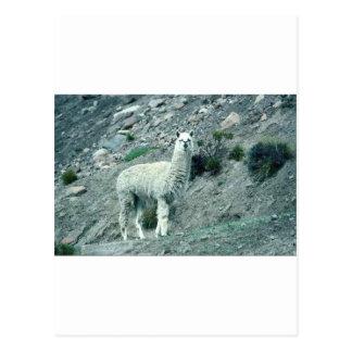 Cartão Postal Alpaca