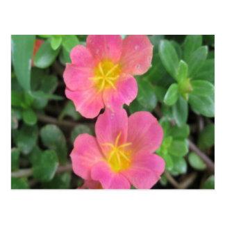 Cartão Postal Amarelo cor-de-rosa de Sedum