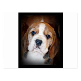 Cartão Postal Amor de filhote de cachorro do lebreiro