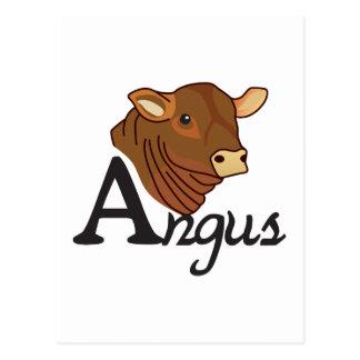 Cartão Postal Angus
