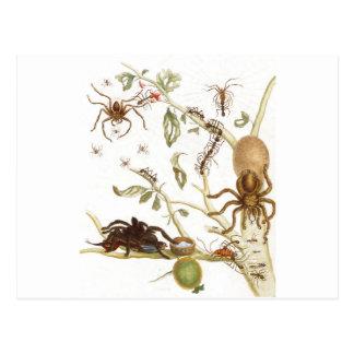 Cartão Postal Aranhas, formigas e colibri em um ramo de…