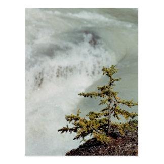 Cartão Postal árvore do bebê com rio