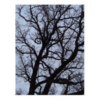 Cartão Postal Árvore do vampiro