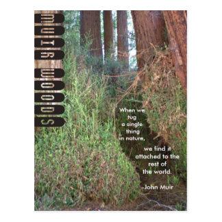 Cartão Postal Árvores das madeiras de Muir com citações