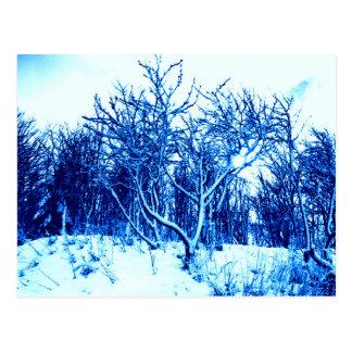 Cartão Postal Árvores e cena da neve, azul cobalto