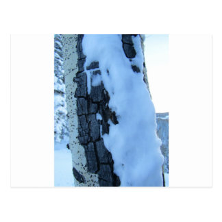 Cartão Postal Árvores nevado