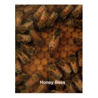 Cartão Postal As abelhas do mel fazem o fundo escuro DIY