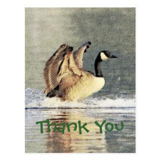 Cartão Postal Aterragem do ganso de Canadá
