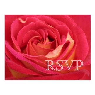 Cartão Postal Aumentou a fotografia floral RSVP
