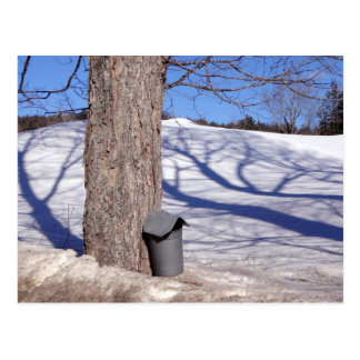 Cartão Postal Baldes da seiva do açúcar de bordo do NH na neve