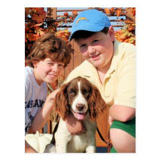 Cartão Postal Baxter - Spaniel de Springer inglês Photo-03