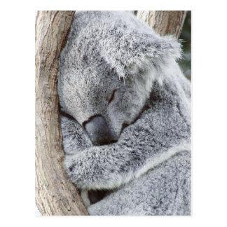 Cartão Postal Bebê de sono do koala