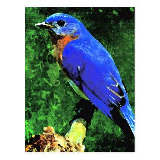 Cartão Postal Bluebird