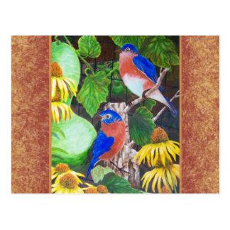 Cartão Postal Bluebird com beira
