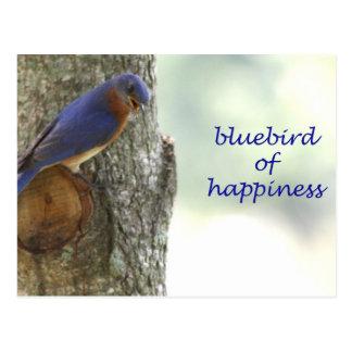 Cartão Postal Bluebird da felicidade