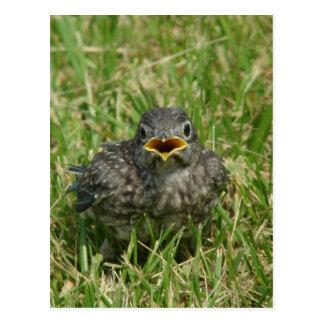 Cartão Postal Bluebird do bebê