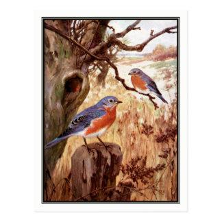 Cartão Postal Bluebird do vintage por Robert Bruce Horsfall