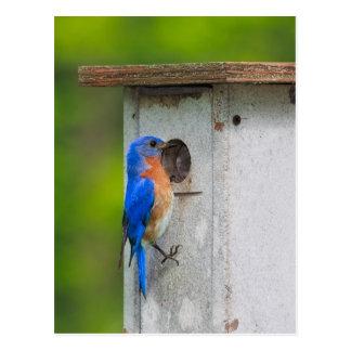 Cartão Postal Bluebird II