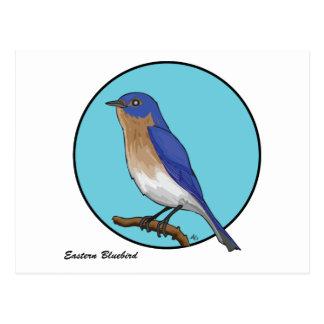 CARTÃO POSTAL BLUEBIRD ORIENTAL