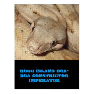 Cartão Postal Boa da ilha de Hogg