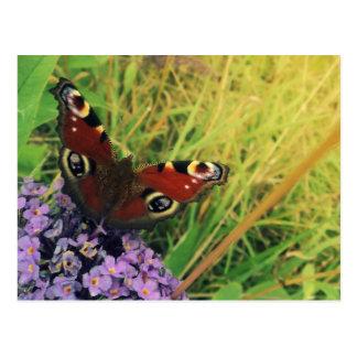 Cartão Postal Borboleta de pavão