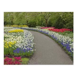 Cartão Postal Caminho do passeio através das tulipas e dos