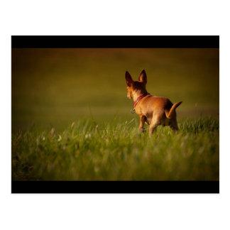 Cartão Postal Cão