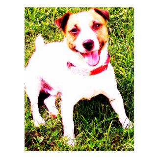 Cartão Postal cão de filhote de cachorro, Jack Daniels