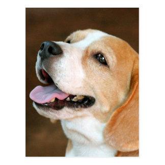 Cartão Postal Cão do lebreiro