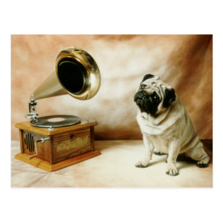 Cartão Postal Cão do Pug de RCA