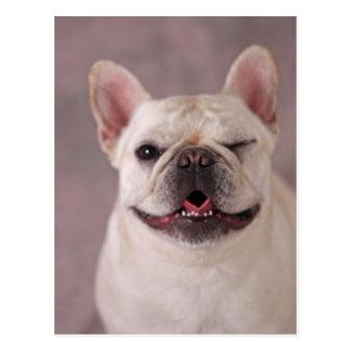 Cartão Postal Cão pisc engraçado buldogue francês