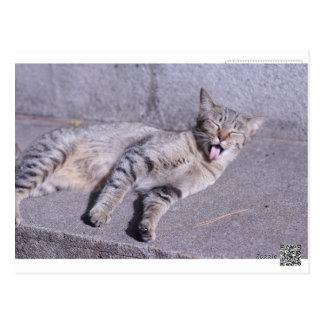 Cartão Postal cat