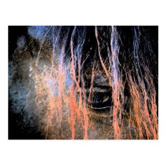 Cartão Postal Cavalo do frisão
