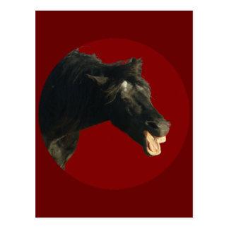 Cartão Postal Cavalo do frisão no círculo vermelho