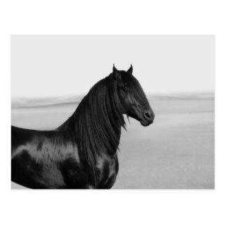 Cartão Postal Cavalo orgulhoso do garanhão do preto do frisão