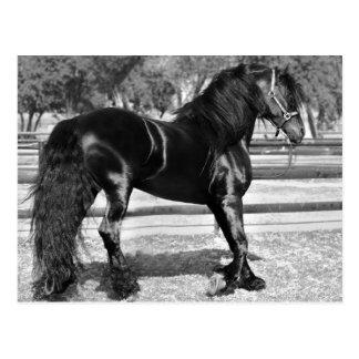 Cartão Postal Cavalo preto do garanhão