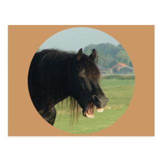 Cartão Postal Cavalo-retrato do frisão que boceja no círculo
