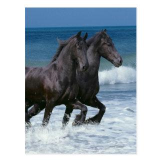Cartão Postal Cavalos da fantasia: Frisões & mar