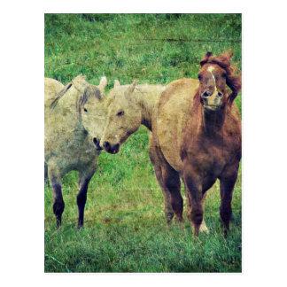 Cartão Postal Cavalos engraçados