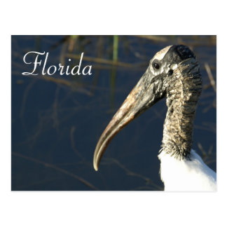Cartão Postal Cegonha de madeira de Florida