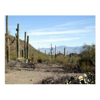 Cartão Postal Cena 02 do deserto de Sonoran